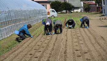 社員による農作業の写真